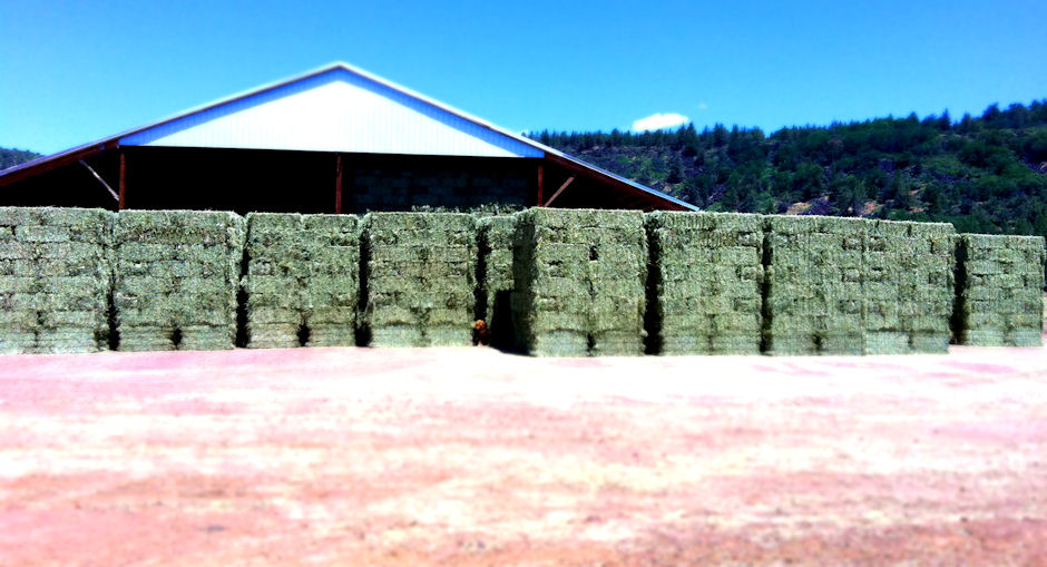 Pet and Livestock Feed
